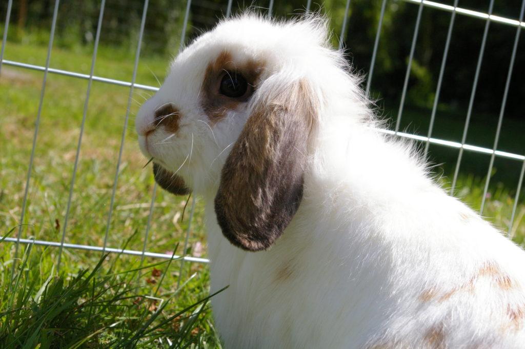 lapin-mediation-animale